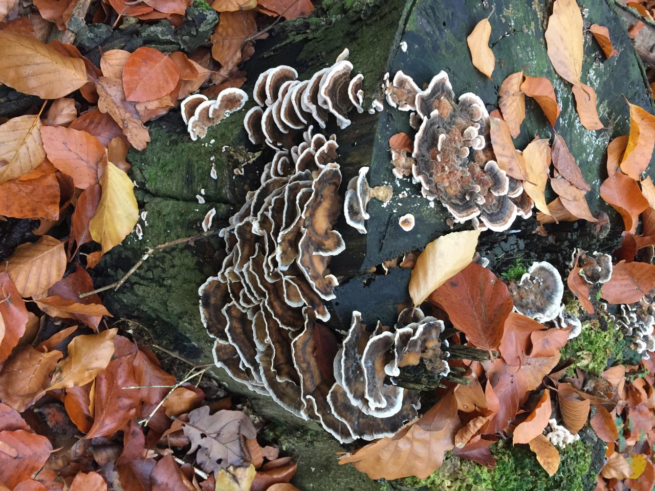 Im Wald nach den feuchten Tagen entdeckt: eine Pilzkolonie.